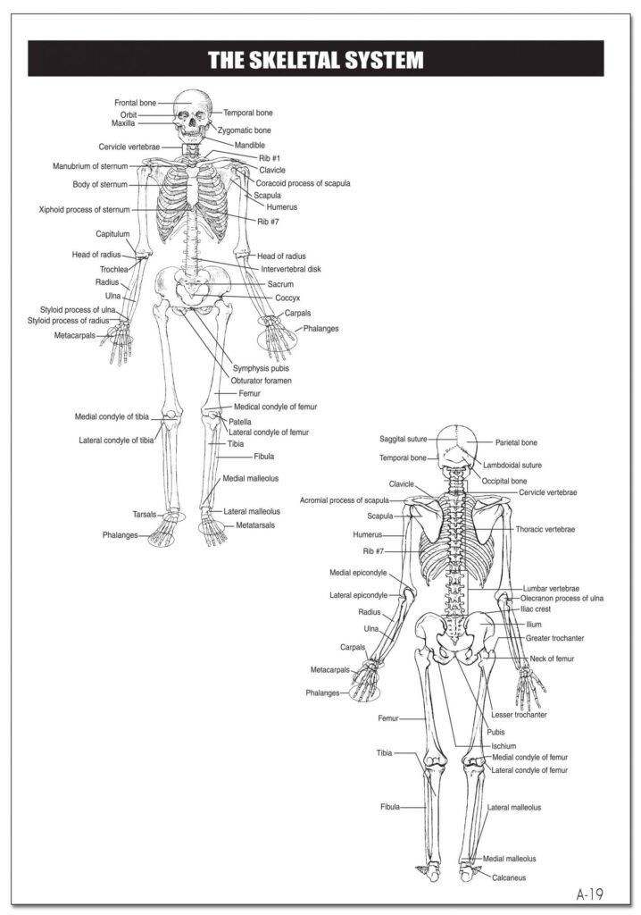 21_JRNL_Skeletal-scaled